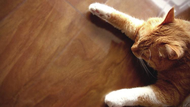 Теплый пол под деревянные покрытия. Ваш Кот будет доволен:)